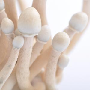 penis envy magic mushroom