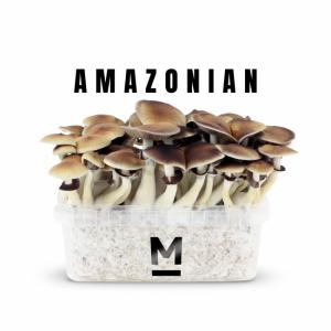 PES Amazon Magic Mushroom grow kit