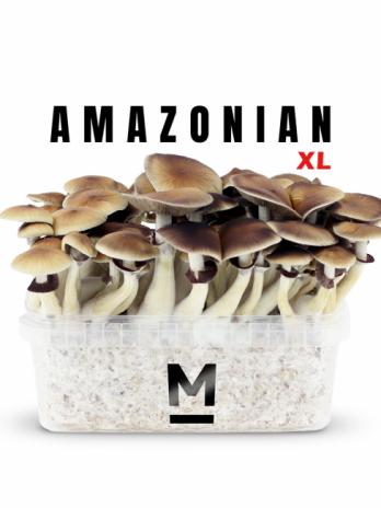 PES Amazon XL magic mushroom grow kit
