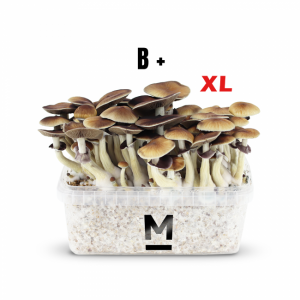 B+ XL magic mushroom grow kit