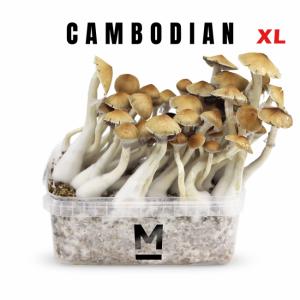 Cambodia XL magic mushroom grow kit