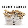 Order Golden Teacher Magic Mushroom Grow Kit Online
