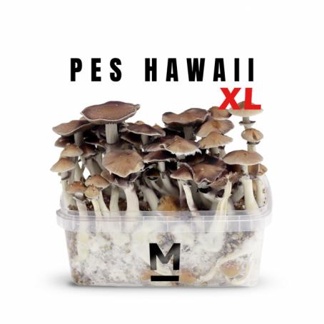 Hawaiian PES Magic Mushroom Grow Kit XL
