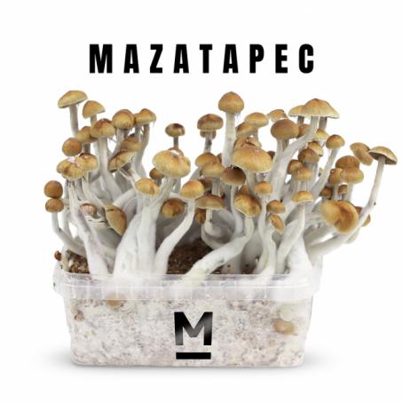 Mazatapec Magic Mushroom Grow kit