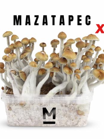 Mazatapec XL magic mushroom grow kit