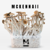 McKennaii Magic Mushroom Grow Kit