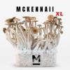 McKennaii XL Magic Mushroom Grow Kit