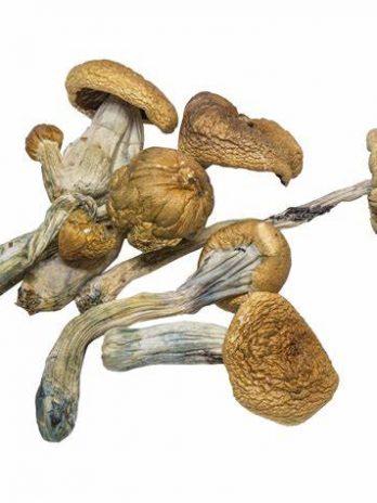 B+ Magic Mushroom