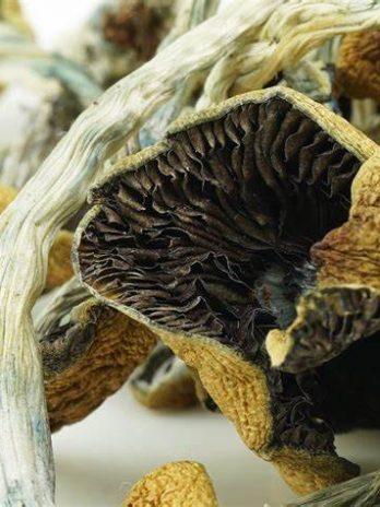 Goldie Magic Mushroom