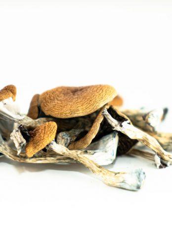 Brazilian Magic Mushroom