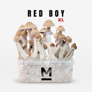 Red Boy XL Magic Mushroom Grow Kit