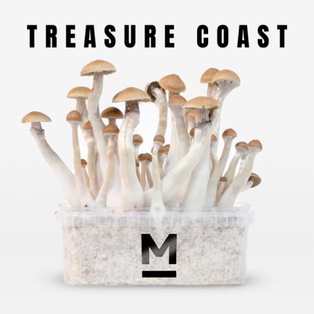 Treasure Coast Magic Mushroom grow kits