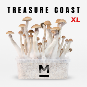 Treasure Coast XL magic mushroom grow kit
