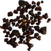 Magic truffles Tampanensis